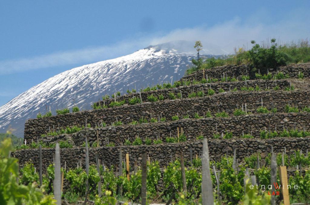 Sicilia, Etna, vigneti terrazzati. foto di Etna Wine lab