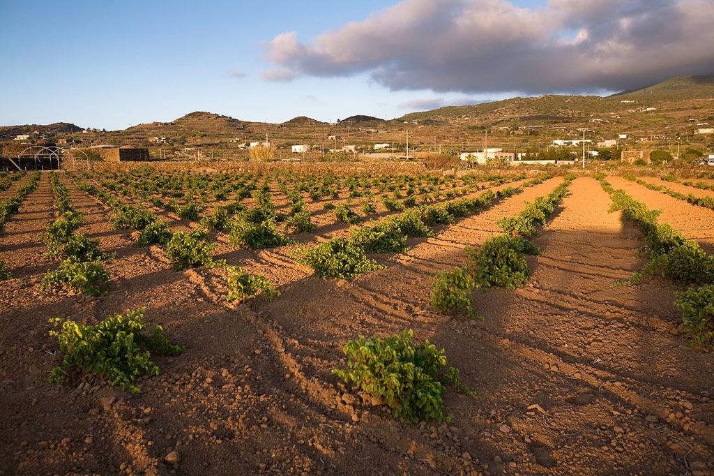 Cantina Bukkuram a Pantelleria. foto di Marco Belli