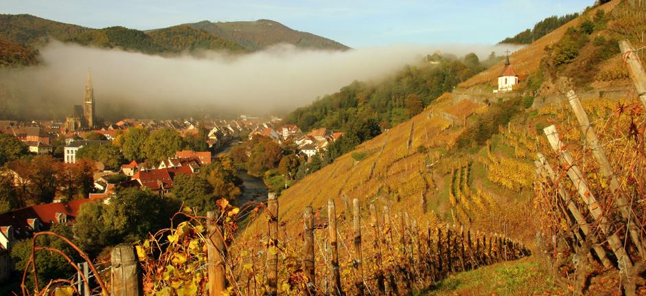 Vigneti in Alsazia. Photo by Norbert Hecht