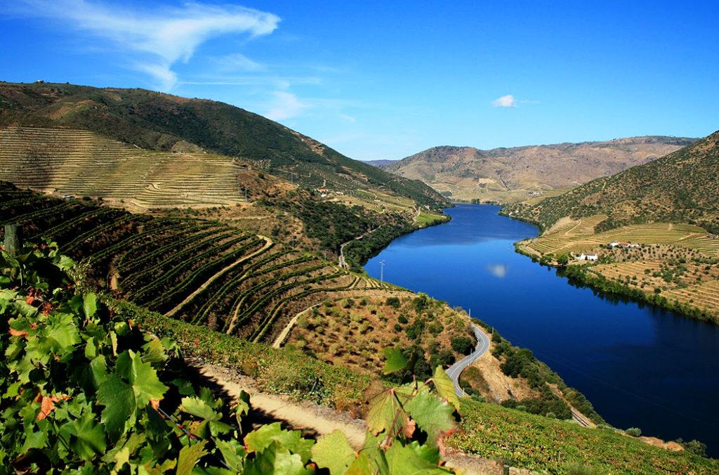 Vigneti nella valle del fiume Douro, Portogallo