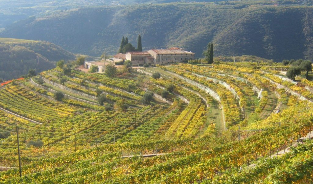 The beautiful vineyards of Valpolicella