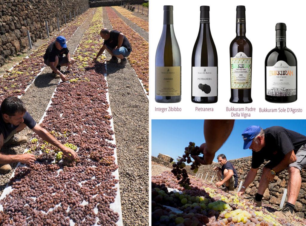 Cantina Bukkuram, la lavorazione delle uve ed i vini prodotti nella cantina di pantelleria. Foto di Pippo Onorati