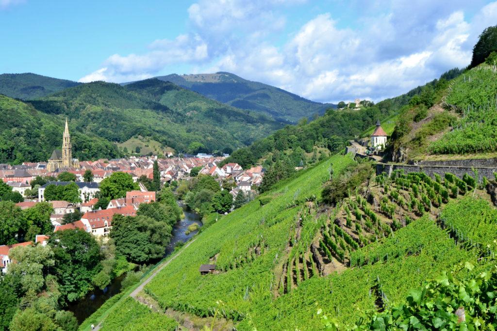 Alsazia. I vigneti migliori sono classificati grand cru d'Alsace, e prendono il nome della vigna o del luogo