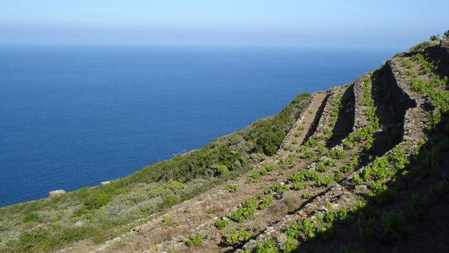 Pantelleria, le colline terrazzate dove vengono coltivati i vigneti di Zibibbo