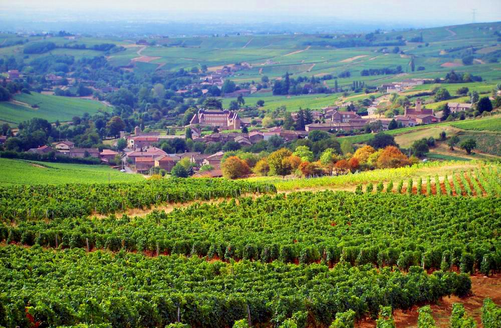 Distese di vigneti nella Borgogna in Francia. (www.france-voyage.com)