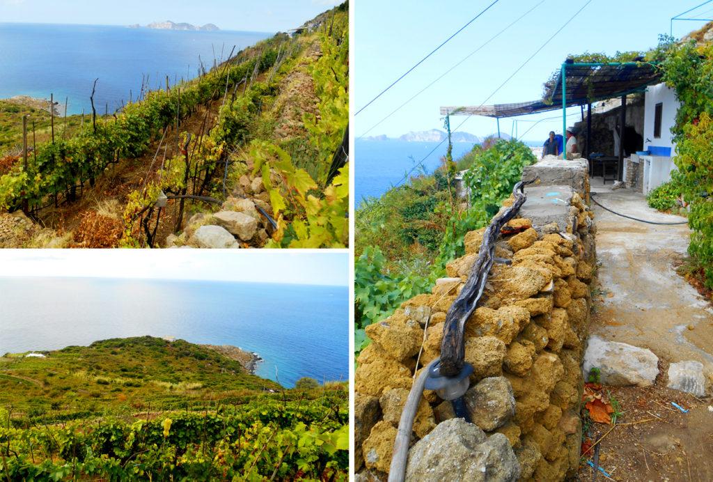 Isola di Ponza, terrazzamenti storici delle antiche Cantine Migliaccio,