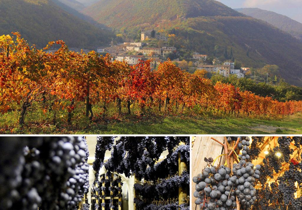 Una veduta di Serrapetrona e le uve di vernaccia sottoposte a leggero appassimento per la produzione dello spumante DOCG