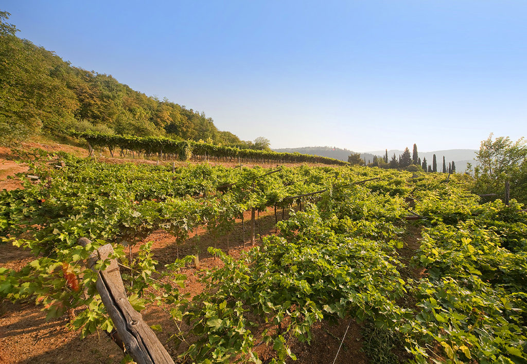 "The ""Scriani"" vineyards are in the heart of the area called Valpolicella Classica and the main, privately-owned ones are situated on a gorgeous hill called ""Monte S. Urbano"""