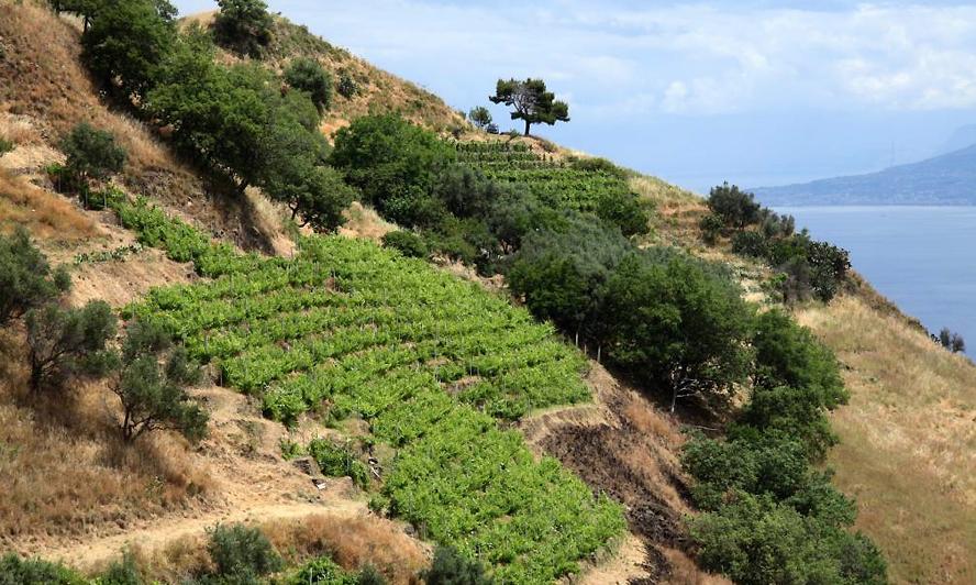 Il Faro della cantina Palari nasce in vigneti situati a S. Stefano Briga, sulle dolci colline che si affacciano sullo stretto di Messina