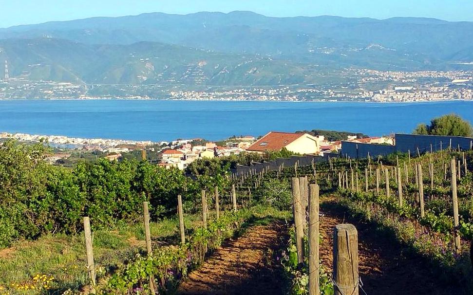 Una veduta dello Stretto di Messina dai vigneti di Faro Superiore della cantina Le Case Matte