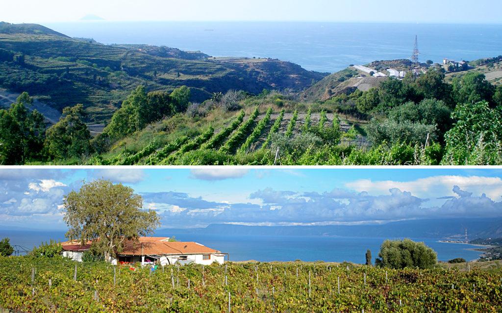 Nella foto in alto i vigneti dell'Azienda Agricola Bonavita a Faro Superiore, piccolo villaggio sulle colline di Messina e la Tenuta Enza La Fauci in Contrada Mezzana a Messina