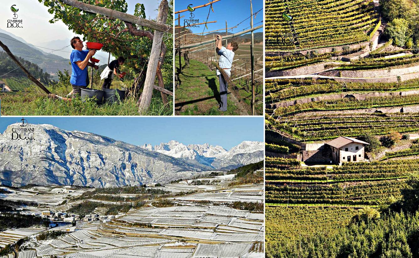 """La """"viticoltura eroica"""" praticata da millenni è stata resa possibile grazie ai terrazzamenti sostenuti da migliaia di antichi muri a secco che hanno uno sviluppo complessivo di circa settecento chilometri"""
