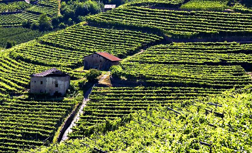 Vigneti in Val di Cembra (foto www.visitpinecembra.it)