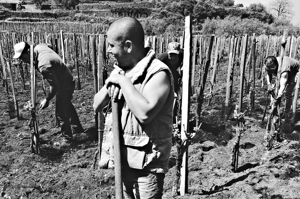 Viticoltori al lavoro nelle vigne dell'Etna